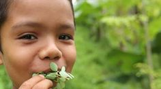 He know's what is good for him. We are distributing Moringa plants to the poorest families in Nicaragua so they can be free from illness and malnourishment. You can help us and help yourself at the same time. Moringa prevents dozens of illnesses and conditions. You can buy your organic Moringa Leaf Powder from us and know you are helping the lives of those in Nicaragua.