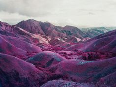 Richard Mosse. Infrared photography. Nowhere To Run, South Kivu, Eastern Congo, 2010