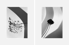 New York Flowers by Zoe Ghertner 24 pages Black and White digitally printed / 6 x 8 in. Heavy grey card cover /saddle-stiched edition of 200 Gottlund, 2012