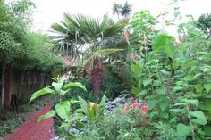 How to create a brilliant exotic garden in a cool climate