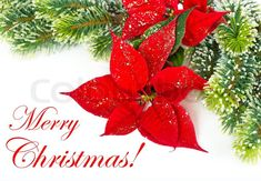 Even if the flower is no more, still, the fragrance can be. Flower Delivery North Hollywood wishes you Merry Christmas. Beautiful Bouquet Of Flowers, All Flowers, Flower Shop Design, Wish You Merry Christmas, Flower Cart, Sympathy Flowers, Same Day Flower Delivery, Local Florist, Floral Arrangements