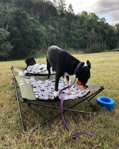 This cutie is really having a good time in their Dog Bed ❤️ ​📸: @ballistic_bec  Click the link above for more info!  #theoutdoorconnection #campingaustralia #exploreaustralia #weareexplorers #offroad #4x4 #campinggoals #camperlifestyle #campingadventures #stargazing #tent #campsite #campingwithdogs #tentdiaries #australian_vacations #beautifuldestinations #seeaustralia #explore #adventures #beautiful_world #travel #solotraveller #travelphotography #traveller #wander #dogsofinstagram