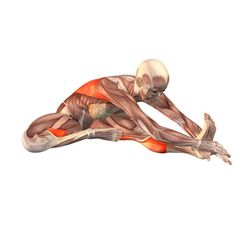 Bend to left leg - Janu Sirsasana left - Yoga Poses | YOGA.com