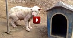This Dog Was Abused and Her Puppies Killed - But a Famous Actress Saved Her