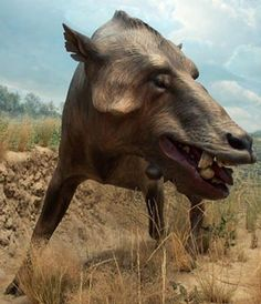 216 best prehistoric mammals images extinct animals fossils