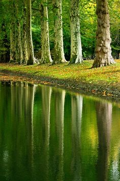Trees and their Reflections