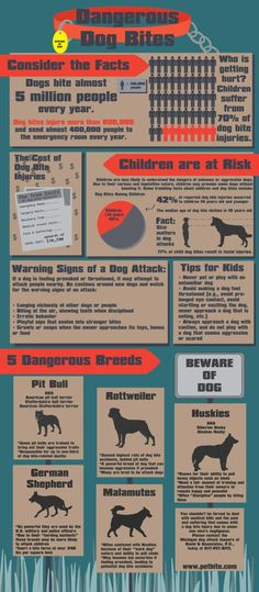 Dangerous Dog Bites can happen to anyone, anywhere.  Call Jeff Gwynn in Riverside CA - 951-684-3774 let him handle your legal rights.