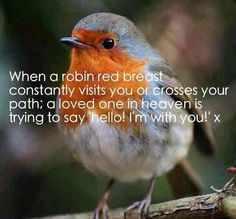 : RT When a robin red breast constantly visits u or crosses ur path,a loved one in heaven is trying to say hello I'm wit . Kyle Gray, Loved One In Heaven, Sister In Heaven, Robin Redbreast, Miss You Dad, Bird Quotes, Angel Quotes, After Life, Robins
