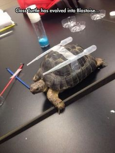 Science Class Is Working On A Real Life Blastoise