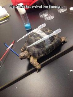 Class Turtle has evolved into Blastoise - funny, class, turtle, evolved, blastoise.