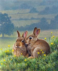 Two brown rabbits huddling together among buttercups in countryside Stock Images Animal Paintings, Animal Drawings, Art Drawings, Bunny Art, Cute Bunny, Rabbit Pictures, Animal Pictures, Animals Beautiful, Cute Animals