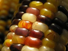 Indian Corn Close-up Glass Gem Corn, Autumn Day, Autumn Harvest, Colorful Candy, Happy Fall, Fruits And Veggies, Vegetables, Fall Halloween, Close Up