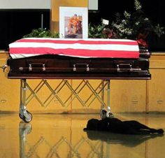There is no love that can compare to that of your most true friend.  Military Dogs, Canine Loyalty, Man's Best Friend Mans Best Friend, Best Friends, Loyal Friends, True Friends, Friends Forever, War Dogs, Military Dogs, Military Service, Military Force