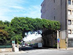 #green #city#lovecity #mycity #streetphotos #street #road #roadtrip #boavista #ig_porto #ig_portugal #sustentabilidade #greenphd by thisismy_space http://ift.tt/1U6cVt5