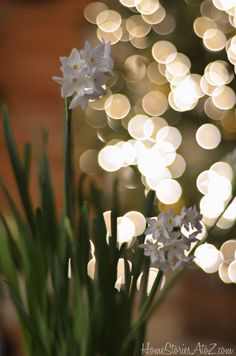 How to get bokeh in your christmas photography.