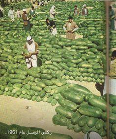 Watermelon from Mosel - Iraq 1961