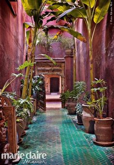 Potted bananas are interspersed with smaller Philodendron bipinnatifidum, at Riad Madani, in Marrakech‎, Morocco Marrakesh, Riad Marrakech, Marrakech Gardens, Moroccan Garden, Moroccan Style, Moroccan Decor, Tropical Garden, Moroccan Bedroom, Moroccan Lanterns