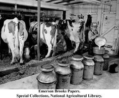 Early Developments in the American Dairy Industry Vintage Farm, Agriculture, White Tractor, Rodeo Events, Farm Images, Dairy Cattle, Old Farm Equipment, Farm Photo, Old Tractors