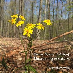 """Every flower is a soul blossoming in nature."" ―Gerard De Nerval  Photo: Spring in Brown County, Indiana. 2015."