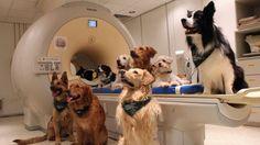 #Confirmado: los perros comprenden lo que los humanos les dicen - Infobae.com: Infobae.com Confirmado: los perros comprenden lo que los…