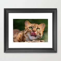 RUSTY SPOTTED CAT LICK Framed Art Print by Catspaws - $37.00