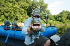 Villwock's trophy muskie ate an enourmous fly (hanging from the left of the fish's mouth), bigger than many trout found in local waters.  | Reading Eagle - BERKSCOUNTRY #Schuylkill #Schuylkill-River #river #water #fish #fishing #fly-fishing  #minnow #smallmouth-bass #bass #fishing-rod #heron