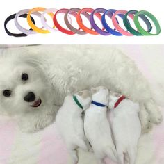 Whelping ID Collars 12 Colours Newborn Puppy Dog Kitten Cat Identification NEW in Pet Supplies, Dog Supplies, Whelping Supplies | eBay!