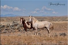 Some gentlemen hanging out in the McCollough Peaks Horse Management Area.