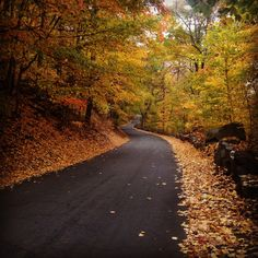 Looks like the back roads in Vermont in which I've been with my hubby. Gorgeous colors!