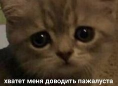 Funny Video Memes, Cute Memes, Funny Cute, Stupid Pictures, Funny Pictures, Koala Meme, Russian Memes, Sad Cat, Cat Icon