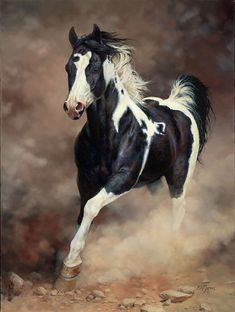 Beautiful markings, spirit, life