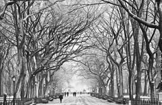 Central Park in winter, New York, USA