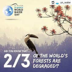 #Repost @un_water    Did you know that two thirds of the worlds forests are degraded?  Learn more about the solutions we find in nature to overcome this challenge #WorldWaterDay on www.worldwaterday.org