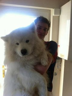 This pup seems to be a beautiful Samoyed, a dog first bred in western Siberia, that is typically used for sledding and cuddling -- to keep t...