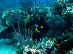 Coral reef and fish in the Bahamas