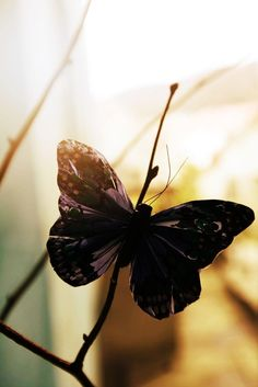 Black Butterfly by Nikiboy Beautiful Bugs, Beautiful Butterflies, Summer Brown, Cute Photography, Butterfly Kisses, Slice Of Life, Touch Of Gold, Beautiful Creatures, Peace And Love