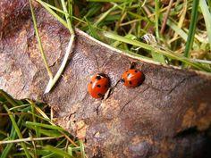 Love bugs? #VirtualTourist