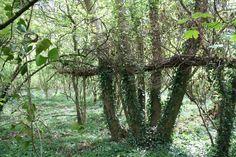 Ploughmans Wood Nottingham