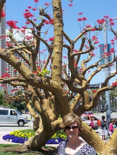 Coral Trees