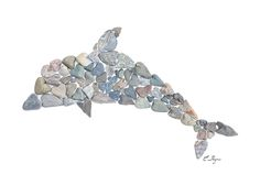 Coastal dolphin