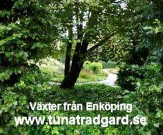Tuna 2 Herbs, Tuna, Plants, Gardening, Baroque, Garten, Herb, Planters, Lawn And Garden