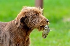 Are You Feeding Your Dog Sardines? You Should Be!