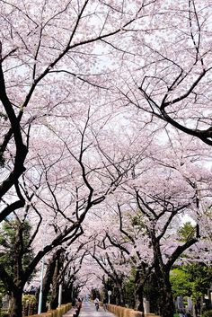 Top 10 Beautiful Places in Japan for Nature Lovers