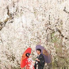 【kyotomaedori】さんのInstagramをピンしています。 《京都日和。http://kyoto-maedori.com/ 京都で前撮りをしております。ご興味のある方は是非HPにお越しください♪ #wedding #bridal #marriage #maedori #kimono #shiromuku #japan #kyoto #flower #temple #love #happy #smile #memorial #cherryblossoms #結婚 #京都 #前撮り #花嫁 #着物 #色打掛 #白無垢 #結婚式 #和装 #袴 #記念 #愛 #桜 #笑顔 #家族》