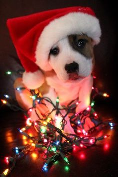 All wrapped up for Christmas  Photography  Pets  Humor Pet photography Animals