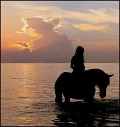 TRUST At its finest, rider and horse are joined not by tack, but by trust. Each is totally reliant upon the other. Each is the selfless guardian of the other's very well-being.~Author Unknown