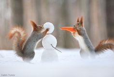 Woodland creatures build snowmen, toss snowballs in photographer's winter playground