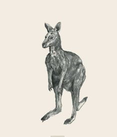 animal photo collection for Animal + All Animals Photos, Animals Images, Animal Pictures, Watercolor Wallpaper, Animal Cards, Stuffed Animals, Tao, Kangaroo, Whale