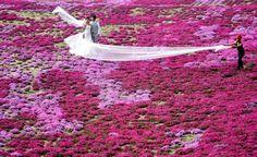 Matrimonio cinese - Foto del Giorno - TPI