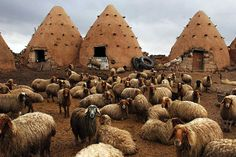 buildings in Syria